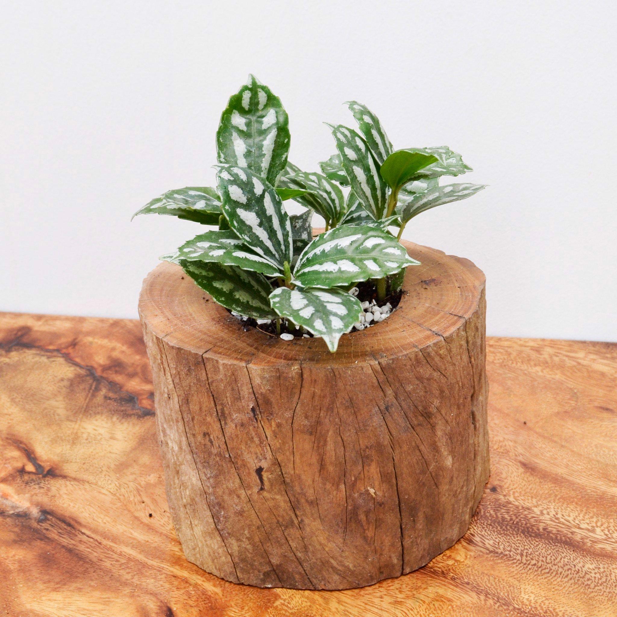 Chậu cây cảnh bằng gỗ tự nhiên – Nội Thất D&Q Decor