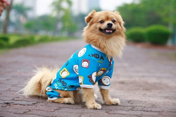 Top 10 Shop bán phụ kiện cho thú cưng uy tín ở TPHCM【2021】 - Top10tphcm.com